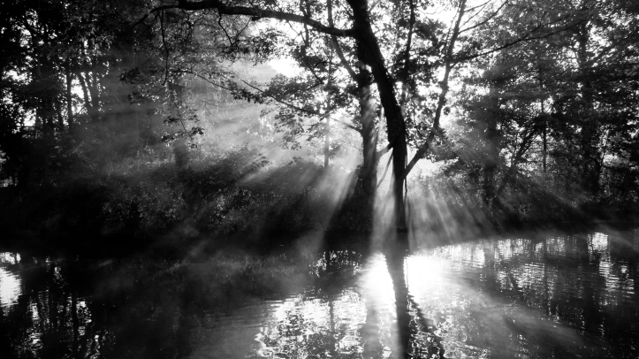 Morning Rays ⓒ James Trickey