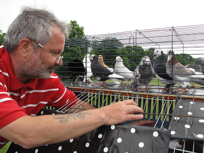 'Pigeon Pete' and the Birmingham Roller Pigeons