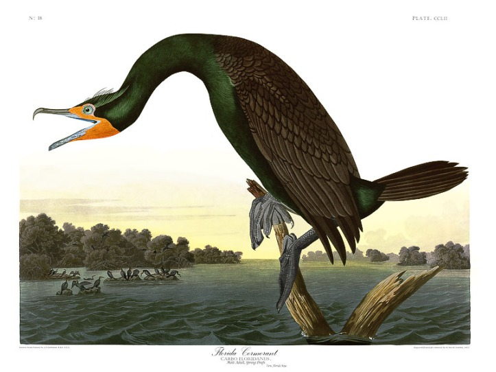 Audubon 'Birds of America'