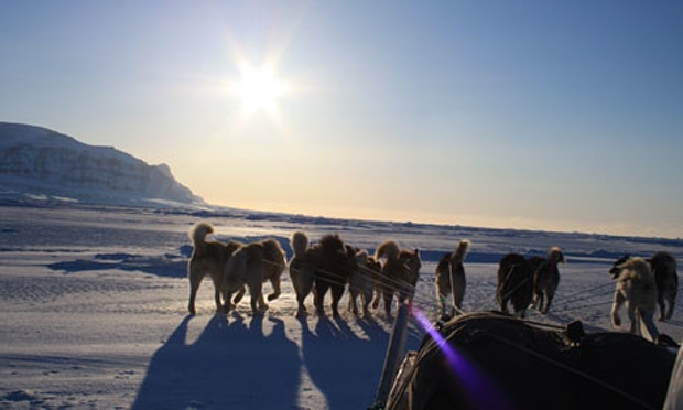 dogsled-greenland-007